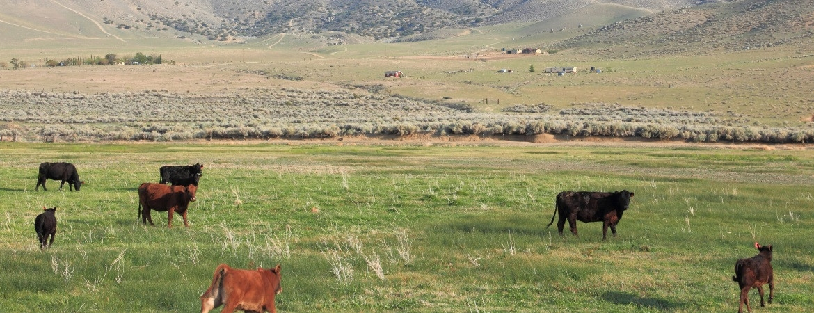 17_cattle-ranch-2-29-1170-450-100 AgVisory Valuation and Consulting for your AgriBusiness - AgVisory