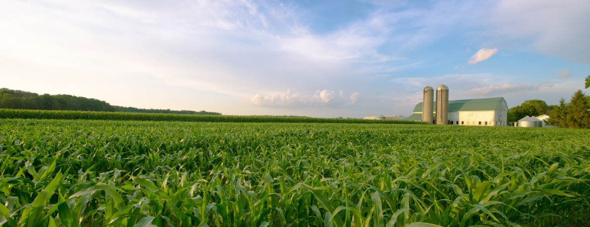 19_corn-fied-32-1170-450-100 AgVisory Valuation and Consulting for your AgriBusiness - AgVisory