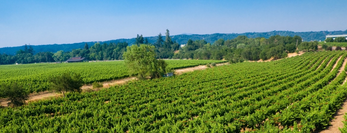 25_vineyard-38-1170-450-100 AgVisory Valuation and Consulting for your AgriBusiness - AgVisory